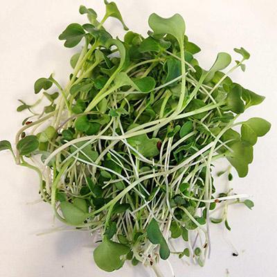 Vari t s de micro pousses bio micro plants robert - Variete de salade d hiver ...